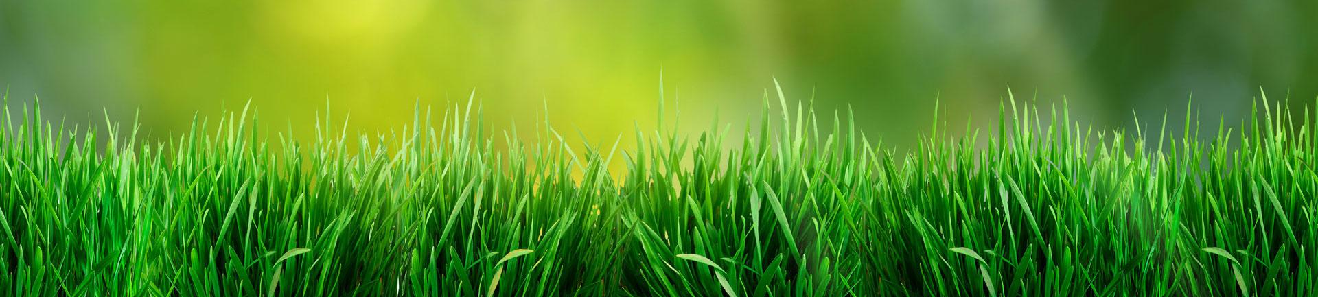 Vertdure toujours l pour vous donner de bons conseils for Forfait tonte pelouse